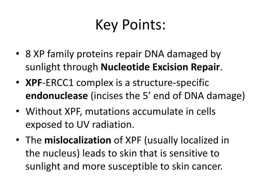 PPT - XPF & its Role in Xeroderma P igmentosum PowerPoint ...