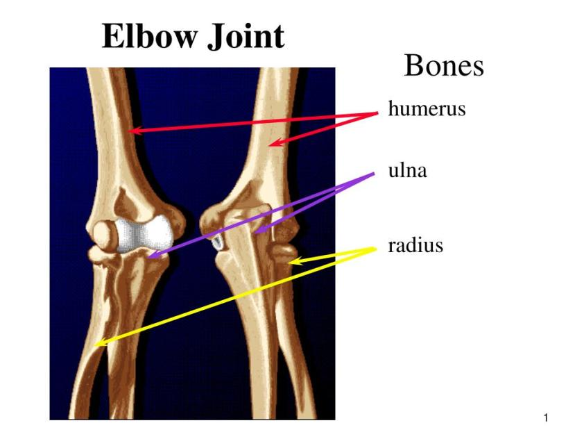 PPT - Elbow Joint PowerPoint Presentation - ID:216026