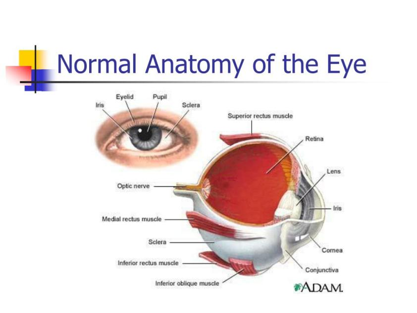 PPT - Eye and Ear Assessment PowerPoint Presentation, free ...
