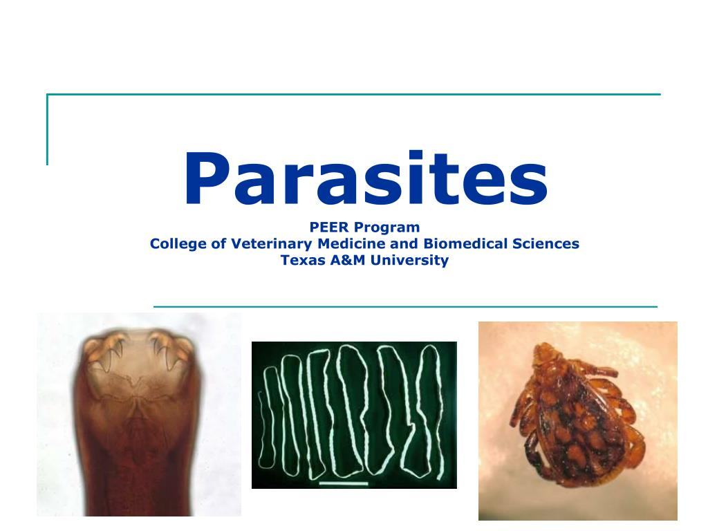 Parasites PEER Program College Of Veterinary