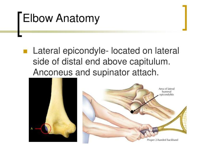 PPT - Elbow Joint PowerPoint Presentation, free download ...