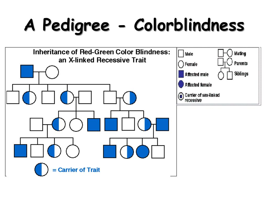 Color Blindness Punnett Square Theworldwithoutcolour Red
