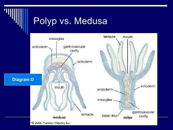 10 Phyla Cnidaria and Ctenophora