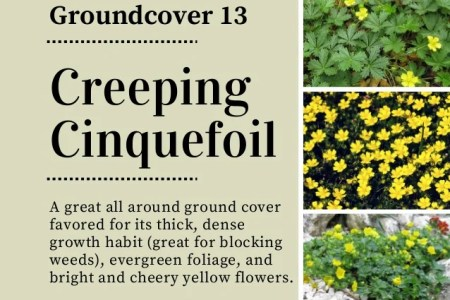 Variegated ground cover with yellow flowers flower shop near me best perennials for shade better homes gardens variety of ground cover do the trick in shaded areas lamium orchid frost s features lavender flowers and mightylinksfo