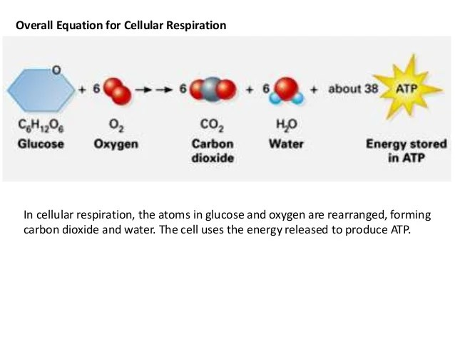 Make Using A Venn Diagram Photosynthesis And Cellular Respiration