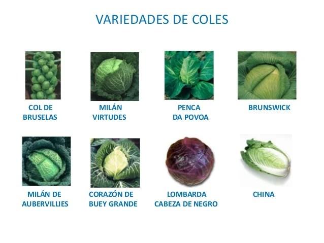 Tipos de col
