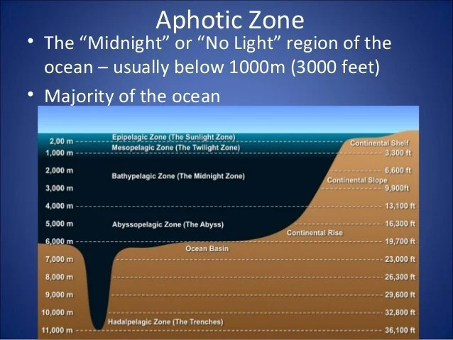 9 zonation in the ocean
