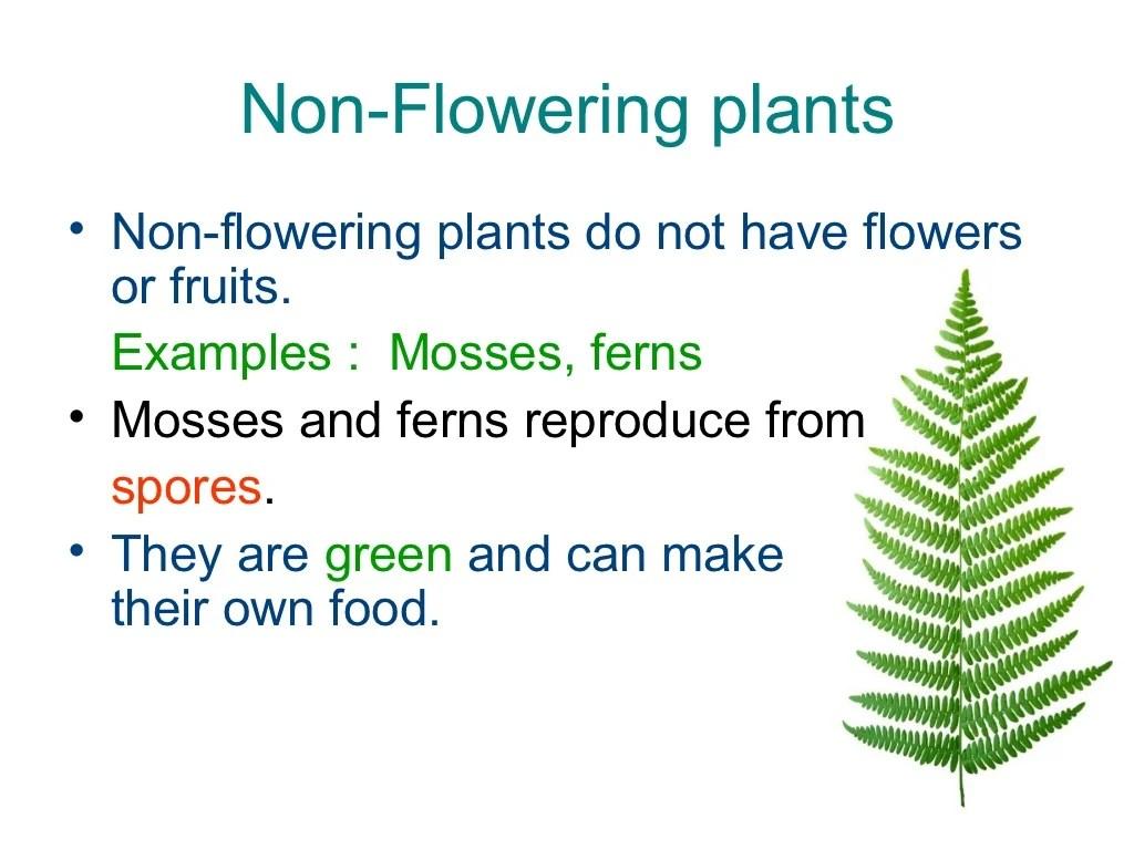 Non Flowering Plants Revision