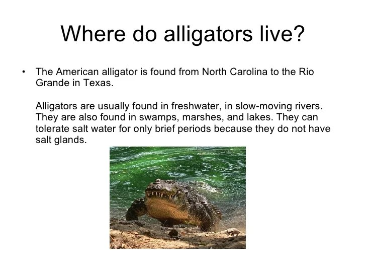 And Alligators Freshwater Salt Water