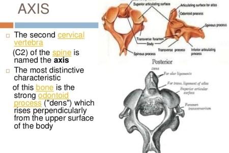 interior vertebrae diagram » Full HD MAPS Locations - Another World ...