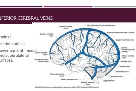 interior inferior sagittal sinus consists of » Full HD MAPS ...