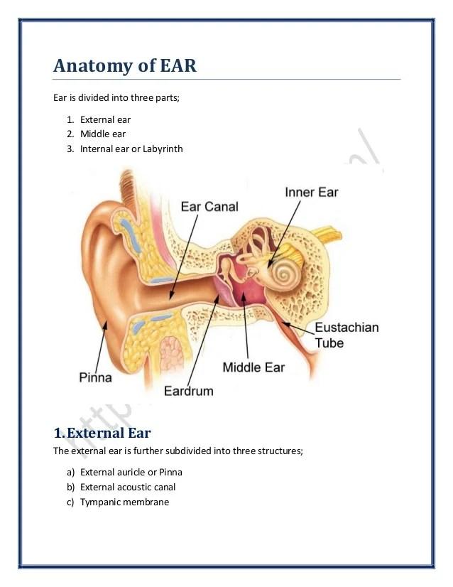 Anatomy of Ear   SurgicoMed.com