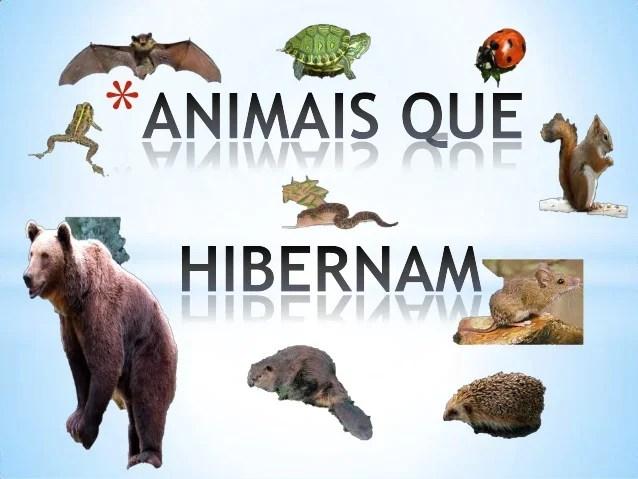 Animais Que Hibernam Pp