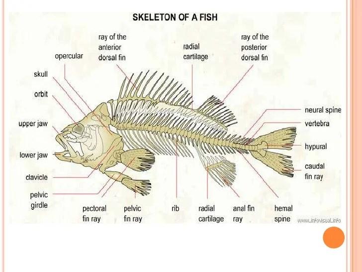 Animals Endoskeleton Examples