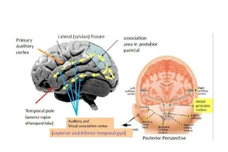 interior inferior temporal lobe function » Full HD MAPS Locations ...