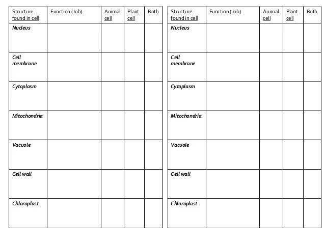 Chloroplast Drawing Worksheet