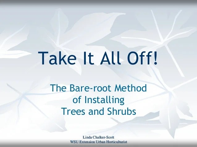 Washed bare root trees