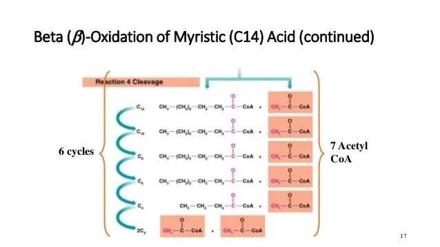 Beta Oxidation Products