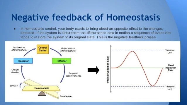homeostasis biology images amp pictures becuo