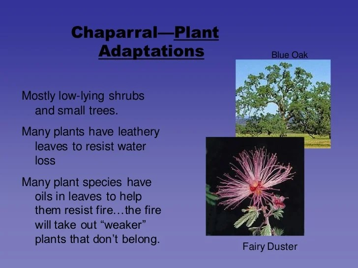 Chaparral Biome Animal Adaptations