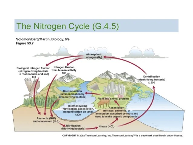 Statements The Nitrogen Cycle Diagram | Online Wiring Diagram