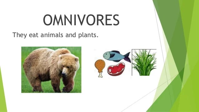 Are Grizzly Bears Carnivores Herbivores Or Omnivores The Best Bear