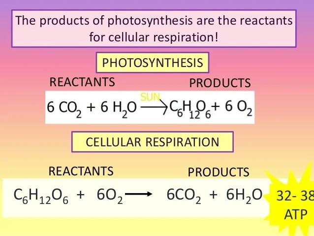Reactants Cellular Respiration