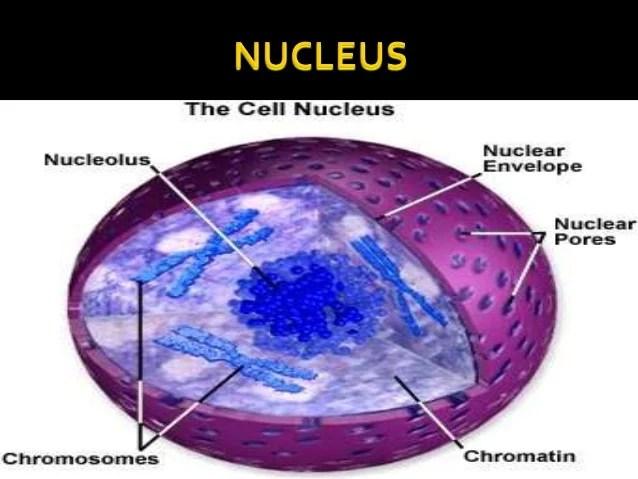 What Gives Color Euglena