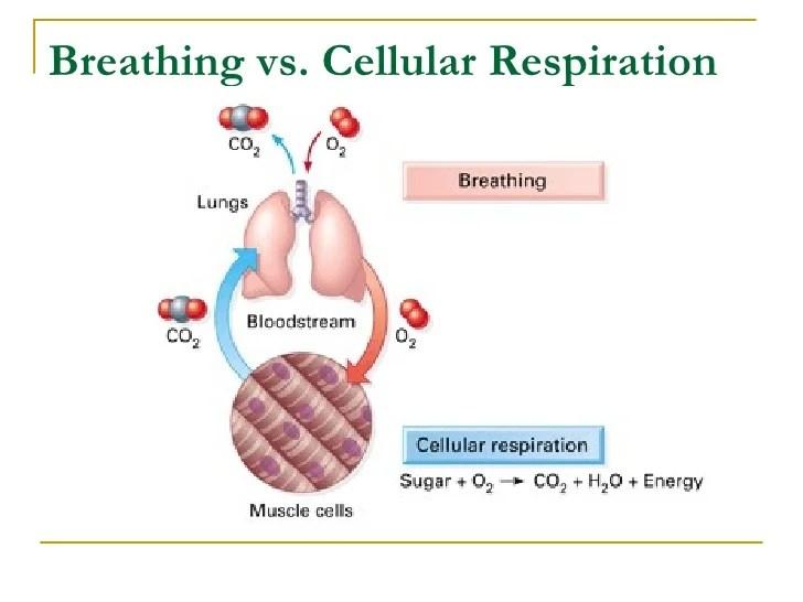 Photosynthesis Vs Respiration Venn Diagram