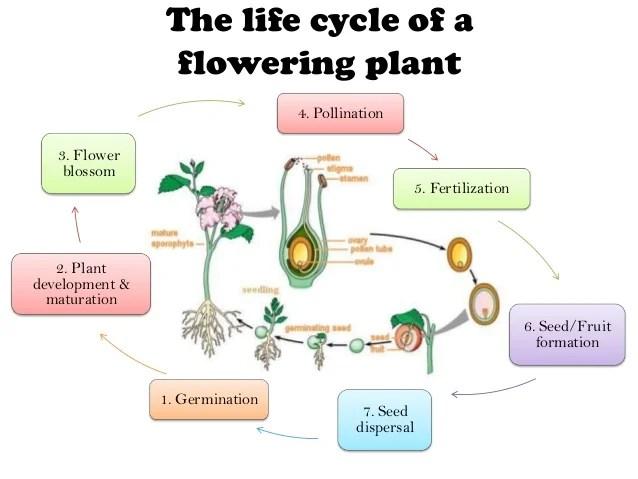 Reproduction Fertilization Process