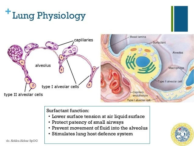 Betamethasone Fetal Lung Maturity