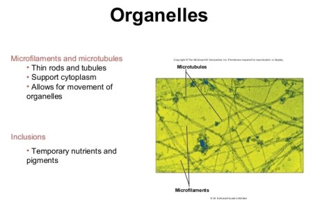 interior partitions organelle anatomy » Full HD MAPS Locations ...