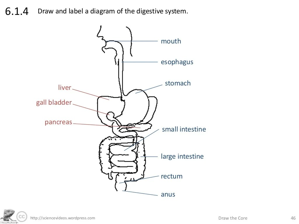 Diagram Of Uteru And Stomach