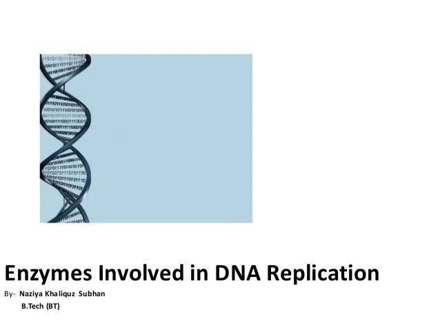Dna Ligase Diagram Replication Process With