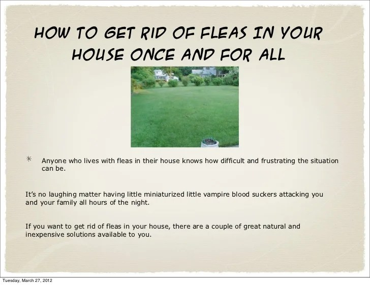 How To Kill Fleas In Your House
