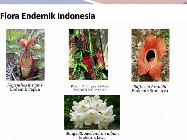 Hasil gambar untuk hewan dan tumbuhan endemik khas indonesia