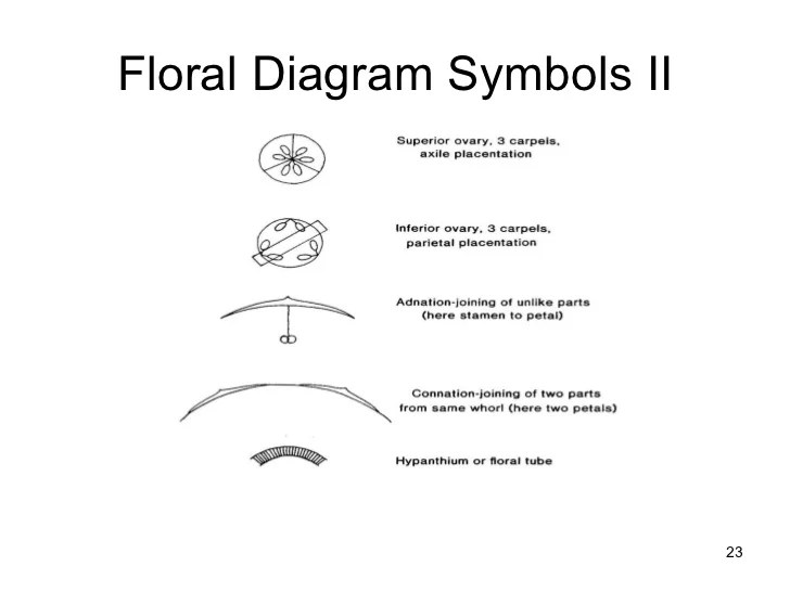 Floral formulas and diagrams
