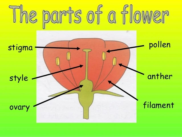Of a flowering plant with label diagram of a flowering plant with label ccuart Images