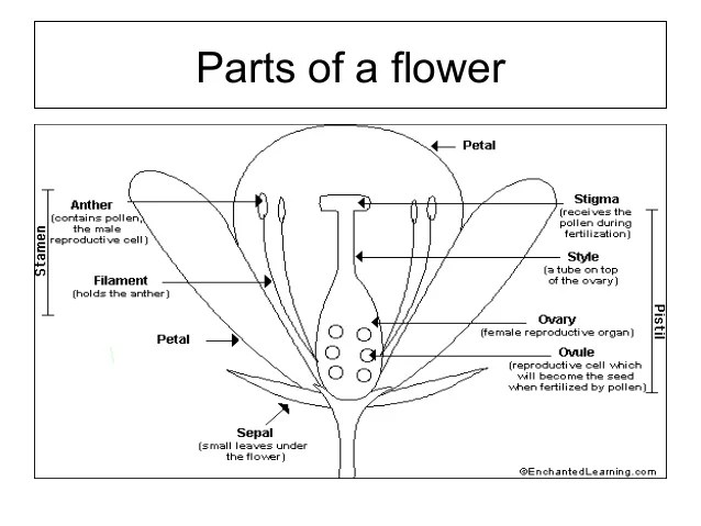 Flower structure and pollination mechanisms