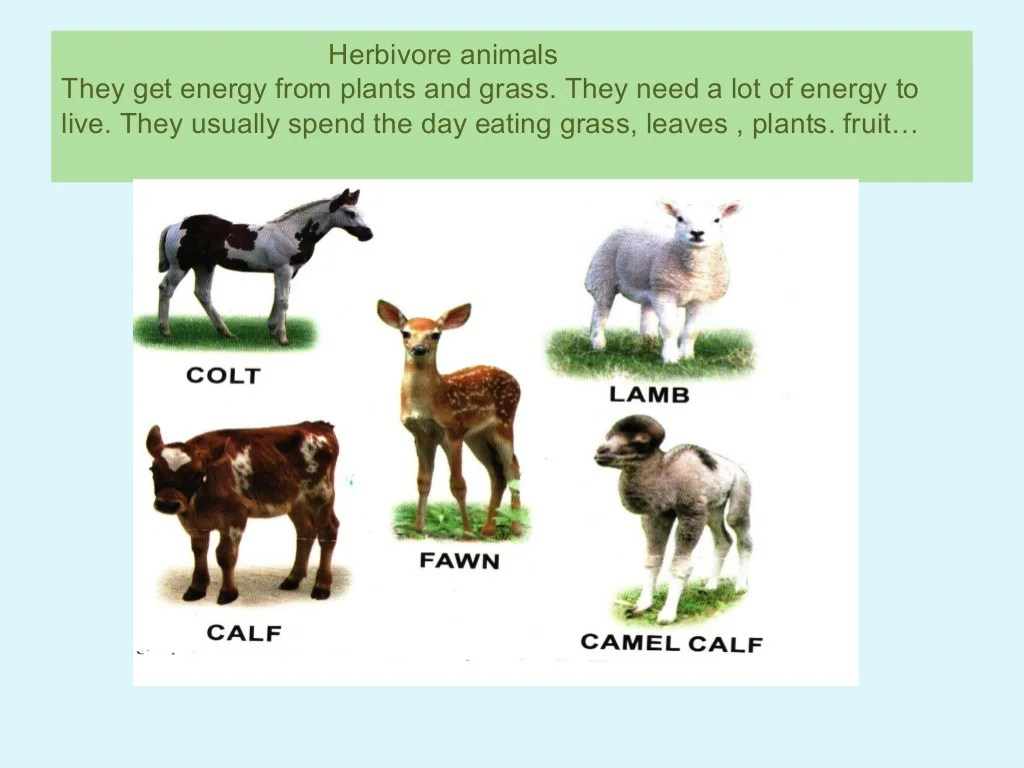 Worksheet Classifying Animals Herbivores Carnivores