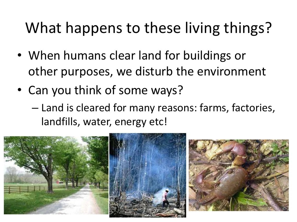 Human Impacts On Plants And Animals