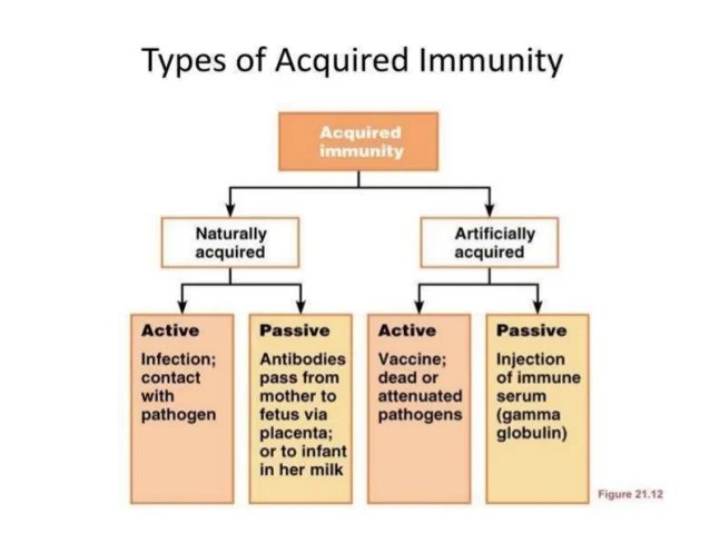 Active And Passive Immunity Examples