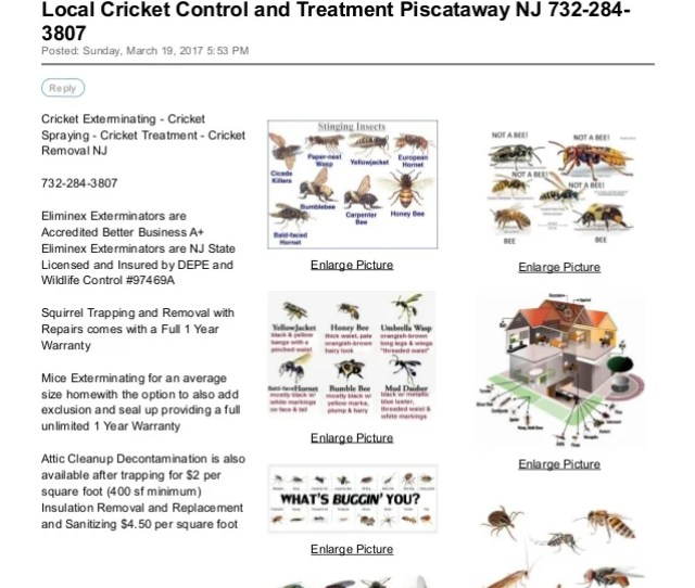Local Cricket Control And Treatment Piscataway Nj  Central