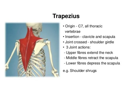interior inferior trapezius » Full HD MAPS Locations - Another World ...