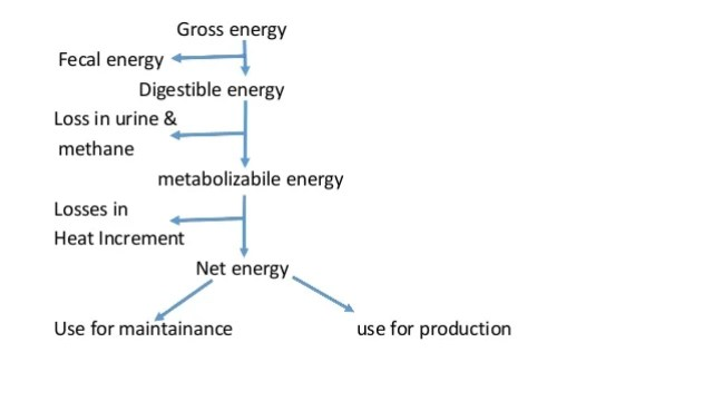 Partitioning of feed energy