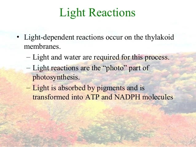 Light Dependent Reactions What Are