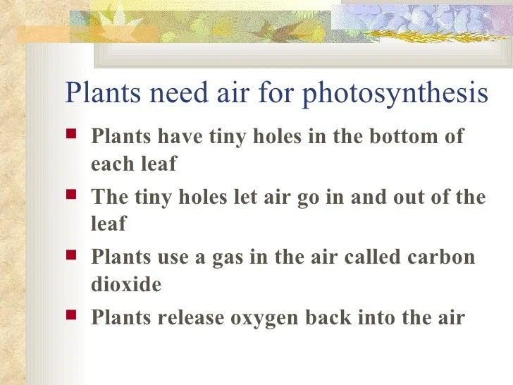 Oxygen Out And And Leaves Going Going Plant Co2 Plants Sunlight