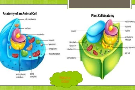Animal and plant cell diagram 4k pictures 4k pictures full hq cells animal and plant cells youtube file simple diagram of plant cell en svg wikimedia commons file simple diagram of plant cell en svg plant cell and ccuart Gallery