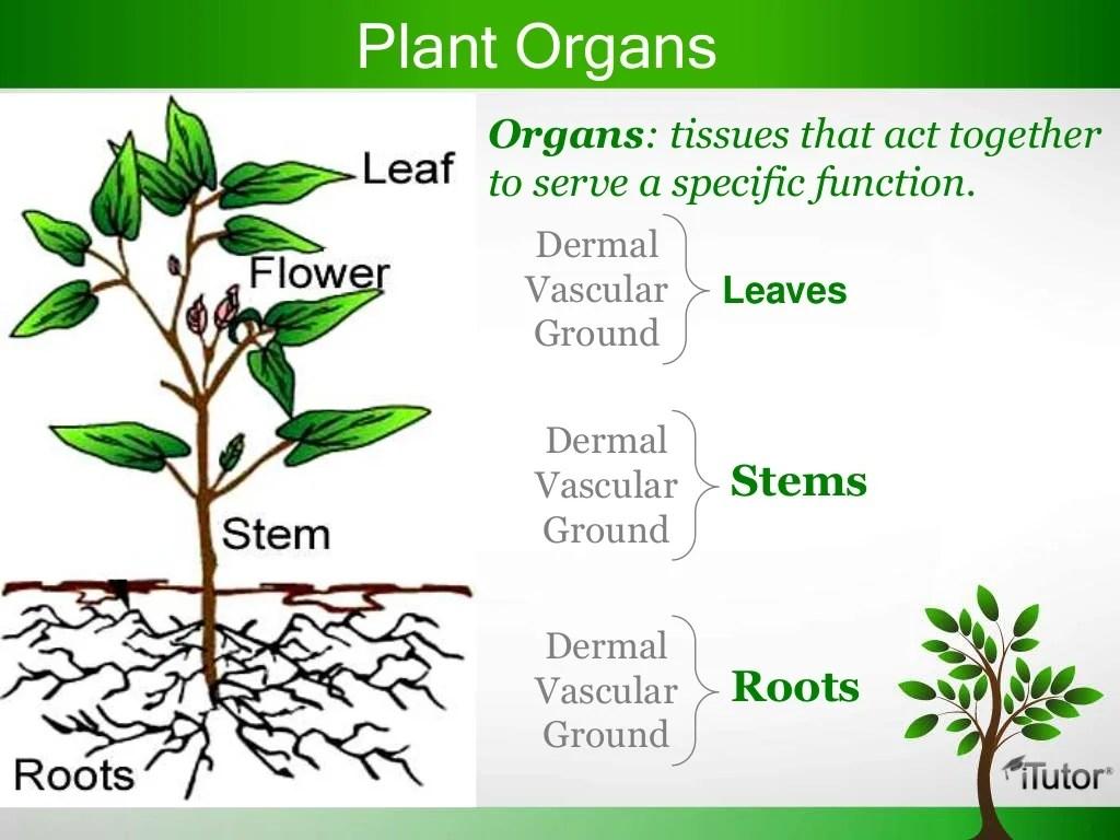 Plant Organs