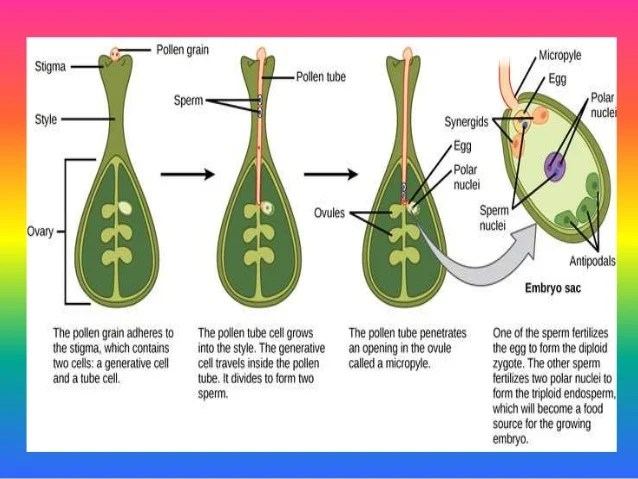 Male And Female Plant Parts Diagrams